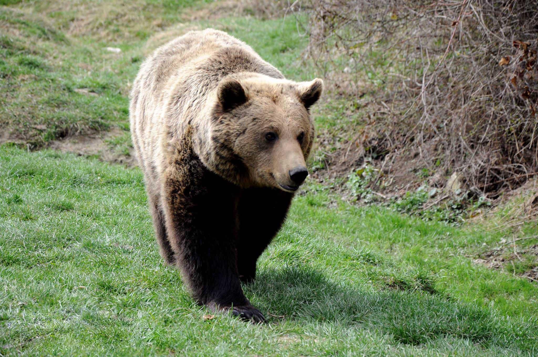 wildlife in romania